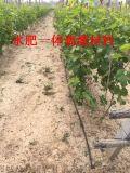 廣西桂林山區果樹滴灌毛管工程技術 壓力補償式滴灌管