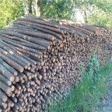 供应杉木杆 2米3米4米绿化支撑杆