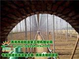 壽光市啓航溫室 溫室工程建設   棉被大拱棚