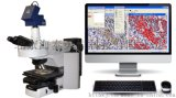 顯微圖像分析系統 染色體核型分析系統