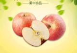 山东烟台栖霞水果苹果红将军新鲜采摘