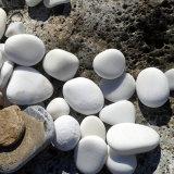 本格廠家供應鵝卵石 鵝卵石濾料 園藝鋪設鵝卵石