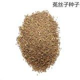 菟丝子种子 豆寄生无根草黄丝种子中药材种子 量大从优 ****