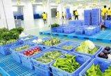 永川塑料筐蔬菜週轉筐週轉箱帶鐵柄塑料箱