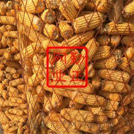 圈玉米网A金属拉伸网钢板网