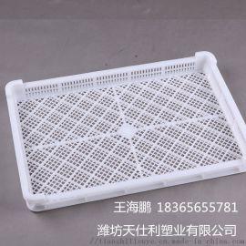 厂家直销塑料单冻盘冷冻盘水产冷冻盘