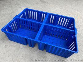 带隔断塑料鸡苗箱鸡苗运输箱鸡鸭苗周转箱