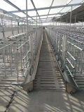 豬場自動化上料 豬舍料線設備 豬用自動化料線