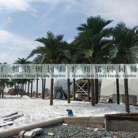 仿真椰子树_人造椰子树_防火椰子树_阻燃椰子树