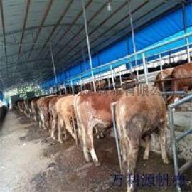 优质牛舍卷帘布 抗氧化养牛棚篷布 挡风牛棚卷帘布
