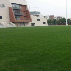 河北幼儿园仿真草坪 体育场户外  草坪