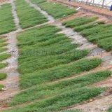 环保植生袋 网袋装土种草袋