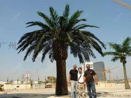 广州圣杰仿真海藻树,仿真椰子树,仿真树生产厂家