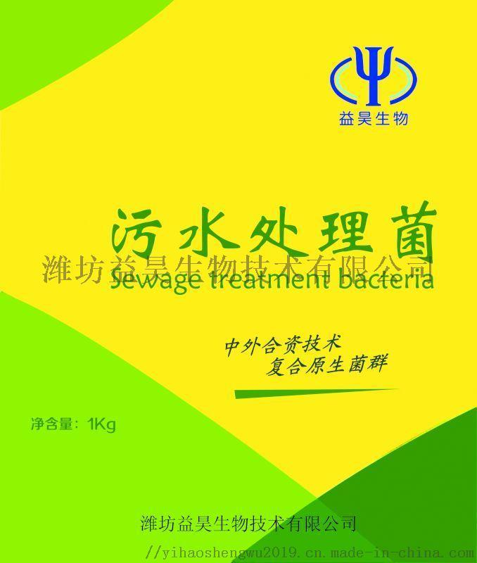 生活污水處理專用菌 河道污水處理生物菌