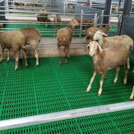 塑料板羊床 羊地板 塑料网床