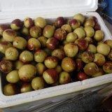 苗圃销售枣树苗 冬枣树苗 易成活 产量高
