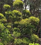 蘇州別墅庭院綠化、別墅庭院設計、蘇州別墅庭院景觀綠化、別墅果樹造型樹