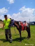 深圳騎馬是怎麼收費的