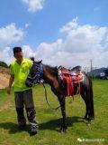 深圳骑马是怎么收费的