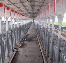 养猪场自动化料塔料线育肥母猪保育送料器喂料设备猪料线养殖设备