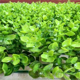 外墙围栏装饰景观草坪,绿色地毯,假草坪,金钱草,人造草