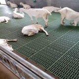 厂家供应羊舍漏粪网 新式塑料羊用漏粪网
