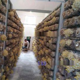 食用菌丝网网架网片食用菌架子网格平菇专用架子