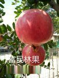 富民超甜新鮮水果軟籽石榴 紅軟石榴