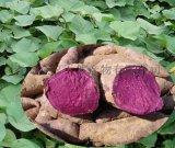 天然無添加出口級別紫色地瓜粉