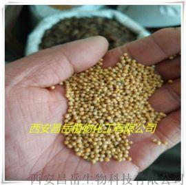 白芥子提取物生产厂家 白芥子英文