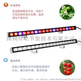 温室大棚红蓝LED防水植物灯条厂家