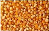 求购玉米饲料原料