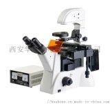 研究级倒置荧光显微镜