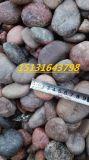 沧州铺路鹅卵石   永顺树坑填充鹅卵石厂家