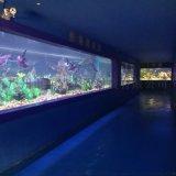 广州最大型鱼缸零售厂家  深圳最大型鱼缸零售