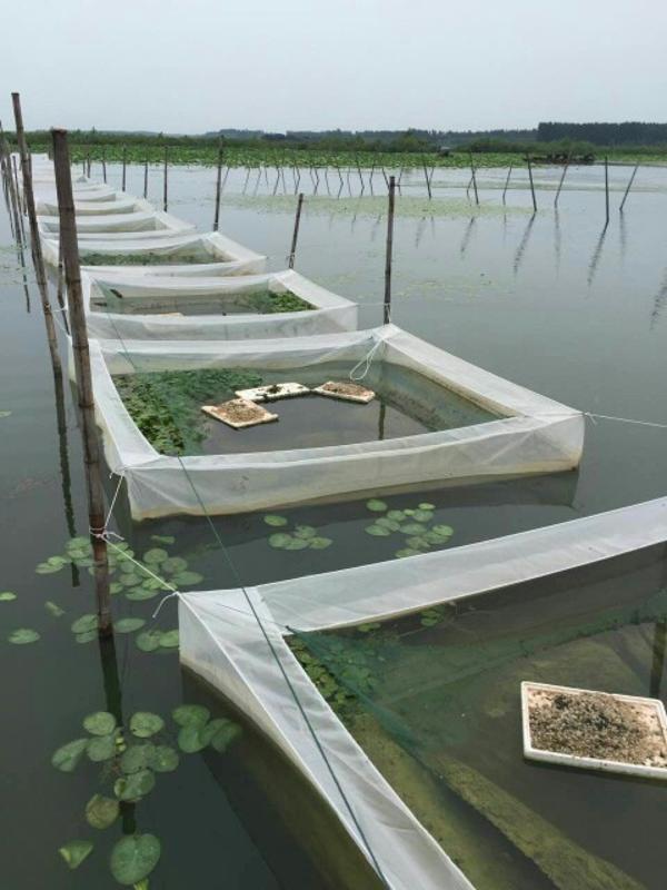 60目加厚加密水蛭 蚂蟥 泥鳅 小苗孵化网箱