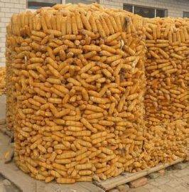 河南山东圈玉米用镀锌电焊网价格厂家