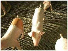 宝鸡工业镀锌铁丝网编织轧花网-铜川猪床轧花网(承重网)生产、加工-渭南3mm镀锌轧花网