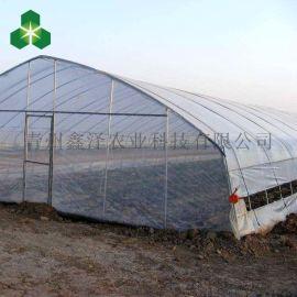 鑫泽 GSP-0091 热镀锌钢管拱棚 热镀锌钢管温室 温室大棚