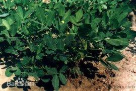 木犀草素 Luteolin