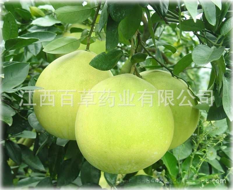 圆柚油 专业生产植物香料油 圆柚精油