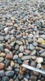 環保綠色 永順建築材料鵝卵石 白色卵石 黑色鵝卵石