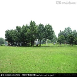 河北卓远人造草坪厂,幼儿园草坪,足球场草坪