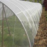 防晒抗老化柑橘覆盖防虫网,广西柑橘防虫网罩,防虫网
