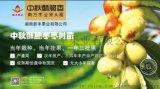 南方最有发展前景的枣树——祁东酥脆枣