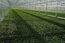 河南焦作 南阳 许昌温室pc板材销售 温室资材价格 河南歌珊温室公司供应