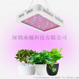 电商热卖1000W植物生长灯