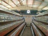低成本镀锌蛋鸡笼刮粪机清粪蛋鸡笼操作简蛋鸡笼