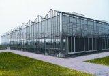 鋼結構溫室大棚,鋼結構溫室大棚廠家