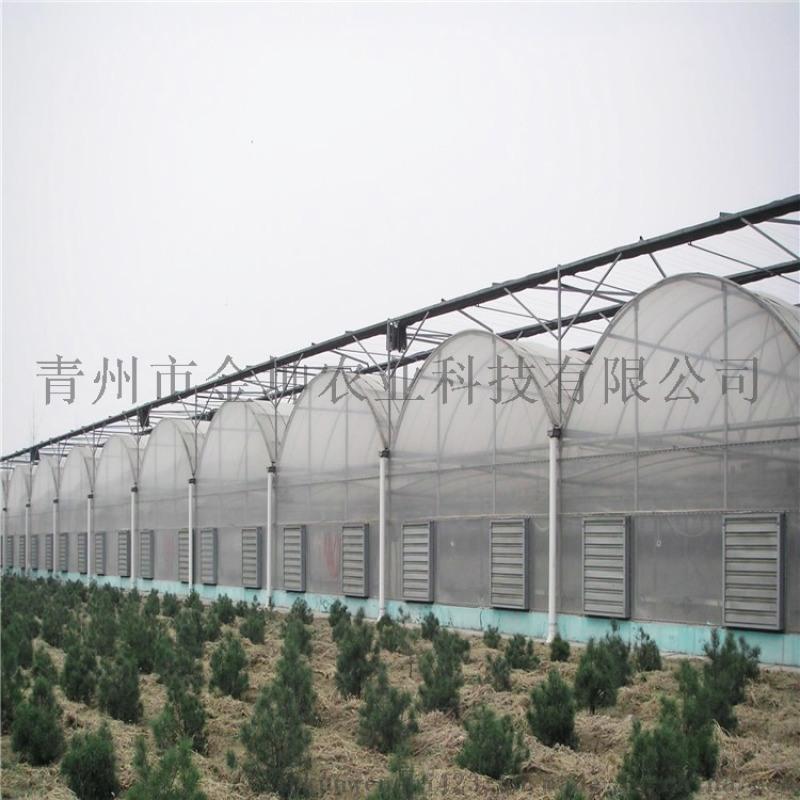 连栋薄膜温室大棚造价 薄膜温室大棚建设